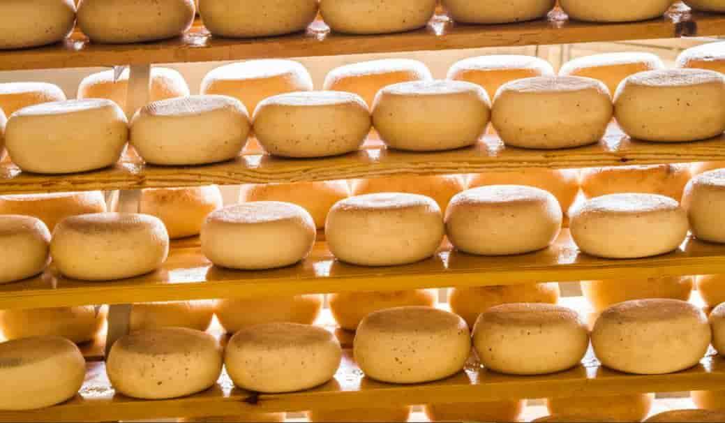 خط تولید پنیر