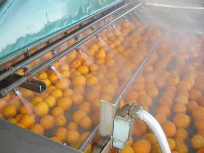 شست و شوی پرتقال ها
