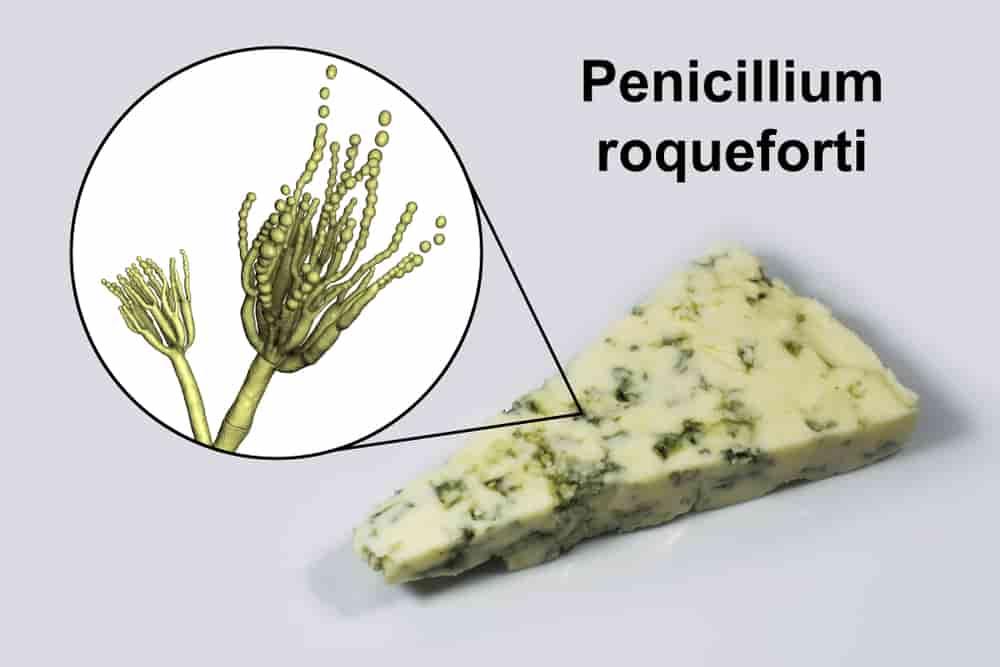 میکروارگانیسم ها در صنایع غذایی
