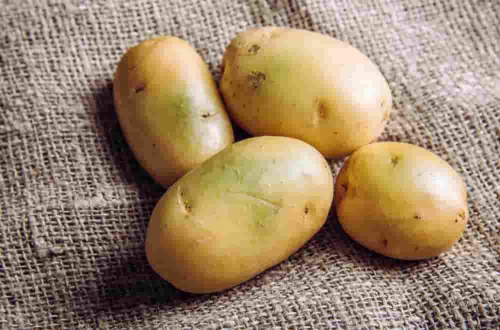 سولانین در سیب زمینی از سموم طبیعی گیاهی