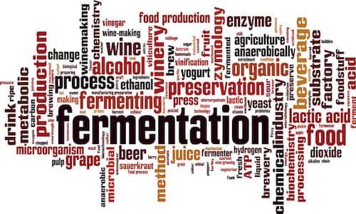 نقش میکروارگانیسم ها در صنایع غذایی