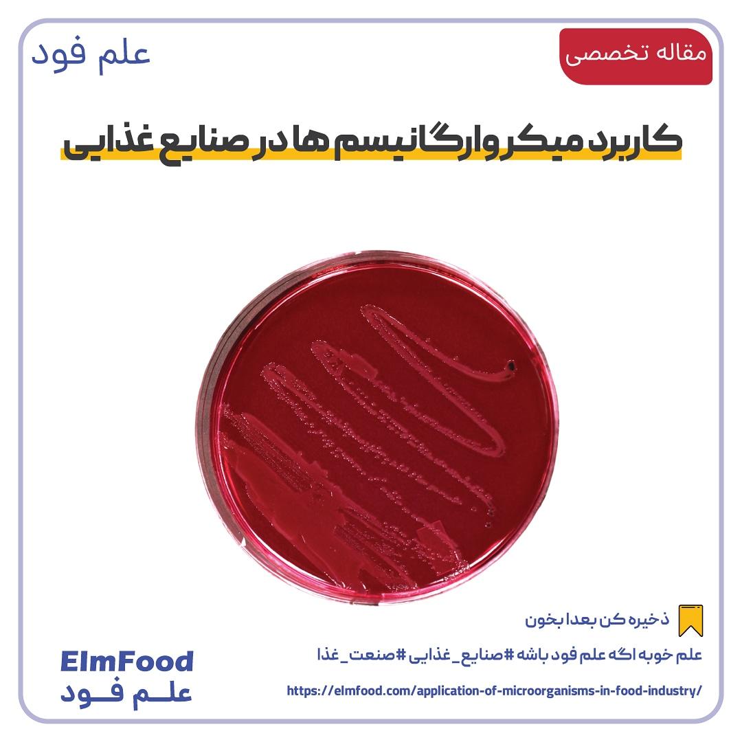 کاربرد میکروارگانیسم ها در صنایع غذایی