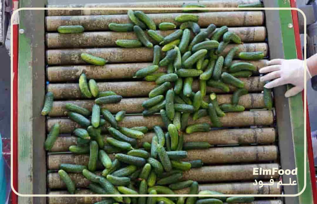 ذرجه بندی خیارها در خط تولید خیارشور