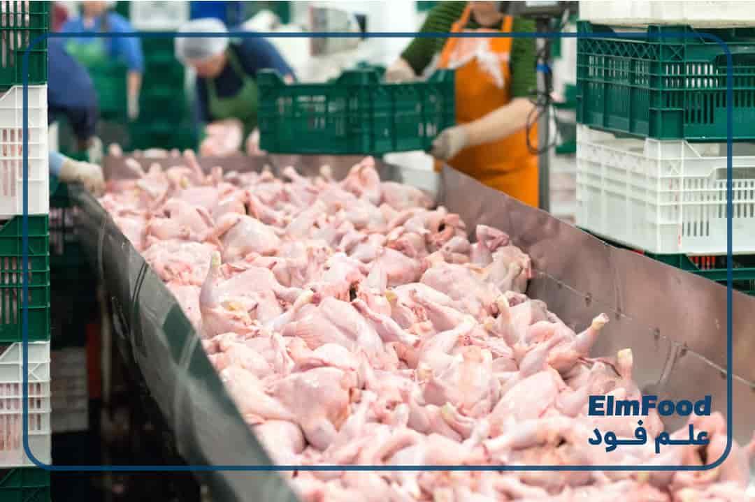 بسته بندی مرغ در کارخانه
